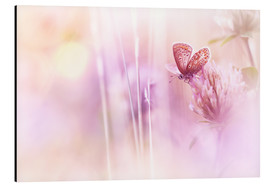 Aluminium print  Beautiful Butterfly - Bob Daalder