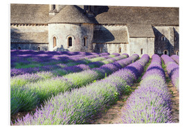 Foam board print  Famous Senanque abbey with its lavender field, Provence, France - Matteo Colombo