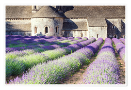 Poster  Famous Senanque abbey with its lavender field, Provence, France - Matteo Colombo