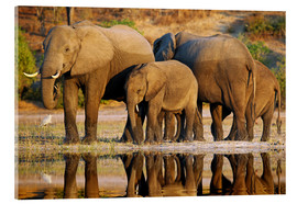Acrylic glass  Elephants at a river, Africa wildlife - wiw