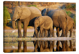 Canvas print  Elephants at a river, Africa wildlife - wiw