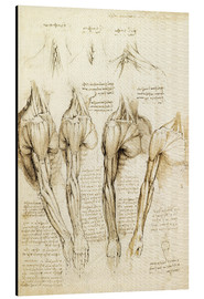 Alu-Dibond  Muscles of shoulder, arm and neck - Leonardo da Vinci