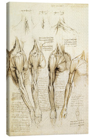 Canvas  Muscles of shoulder, arm and neck - Leonardo da Vinci
