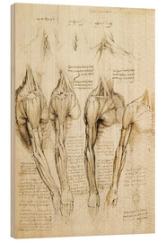 Wood print  Muscles of shoulder, arm and neck - Leonardo da Vinci