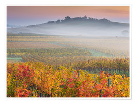 Premium poster  Vineyards IV - Rainer Mirau