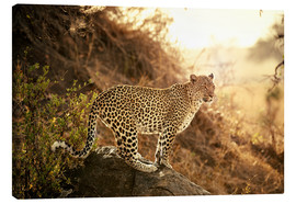 Jürgen Ritterbach - female Leopard at sunset