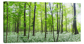 Canvas print  A forest in springtime with wild garlic - Benjamin Butschell