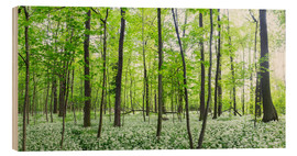Wood print  A forest in springtime with wild garlic - Benjamin Butschell