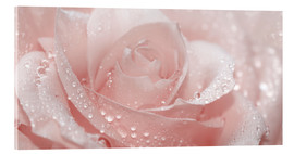 Acrylic print  Rose with drops - Atteloi
