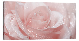 Canvas  Rose with drops - Atteloi
