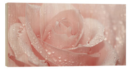 Wood print  Rose with drops - Atteloi