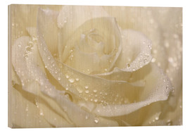 Wood print  White rose with drops - Atteloi