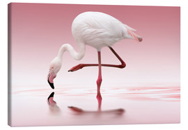 Canvas  Flamingo - Doris Reindl