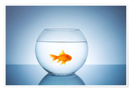 Premium poster  Fishbowl with goldfish - rclassen