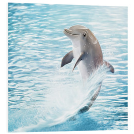 Forex  dolphin - Photoplace Creative