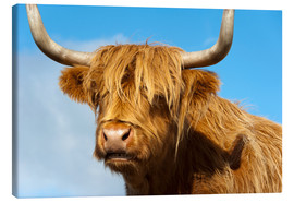 Canvas print  Scottish highland cattle - Frauke Scholz