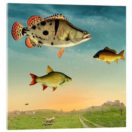 Acrylic print  fishes - Mark Ashkenazi