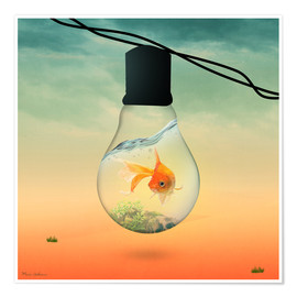 Premium poster  lights fish B - Mark Ashkenazi