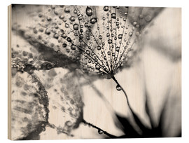 Wood print  Dandelion Dew in Black and White - Julia Delgado