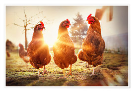 Premium poster Chickens on the runway