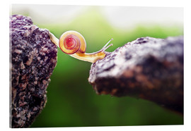 Acrylic print  Overcome obstacles - Gabi Stickler