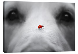 Canvas  Ladybug on Dog Nose - Gabi Stickler