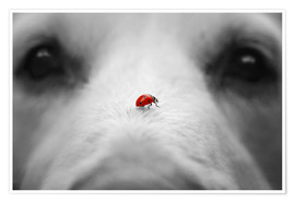 Premium poster Ladybug on Dog Nose