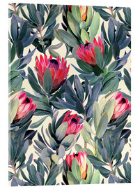 Acrylic print  Painted Proteas - Micklyn Le Feuvre