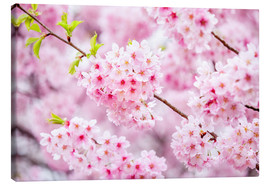 Canvas print  Japanese cherry blossom in spring - Jan Christopher Becke