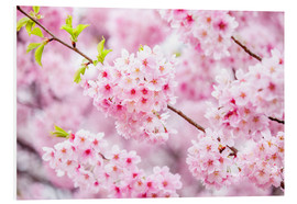 Forex  Japanese cherry blossom in spring - Jan Christopher Becke