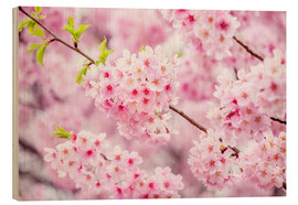 Wood print  Japanese cherry blossom in spring - Jan Christopher Becke