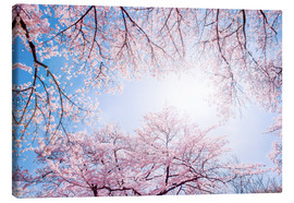 Canvas print  pink cherry blossom in spring with backlight and blue sky - Jan Christopher Becke