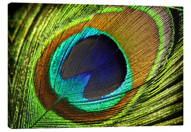 Canvas print  Peacock feather - Mark Ashkenazi
