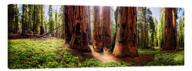 Canvas print  Sequoia giant, panoramic - Michael Rucker