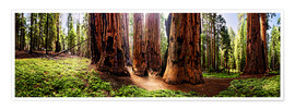 Premium poster  Sequoia giant, panoramic - Michael Rucker