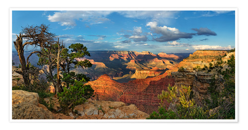 Premium poster Grand Canyon with knotty pine