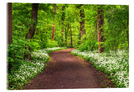 Acrylic glass  Path through Forest full of Wild Garlic during Spring - Andreas Wonisch