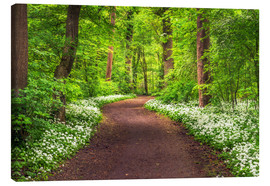 Canvas print  Path through Forest full of Wild Garlic during Spring - Andreas Wonisch