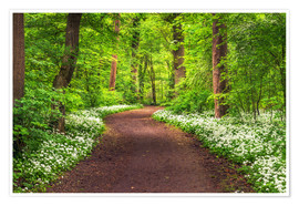 Poster  Path through Forest full of Wild Garlic during Spring - Andreas Wonisch