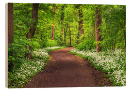 Wood print  Path through Forest full of Wild Garlic during Spring - Andreas Wonisch