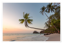 Premium poster Palm tree and exotic sandy beach at sunset, Costa Rica