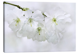 Canvas print  spring blossoms - Atteloi