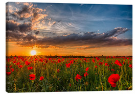 Canvas print  Field of Poppies, Bavaria - Achim Thomae