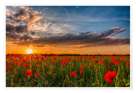 Poster  Field of Poppies - Bavaria - Achim Thomae