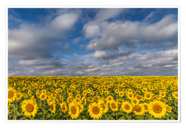 Achim Thomae - Sea of Sunflowers