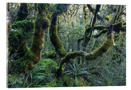 Acrylic print  Mossy rainforest of Routeburn track, New Zealand - Matteo Colombo