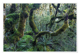 Premium poster Mossy rainforest of Routeburn track, New Zealand