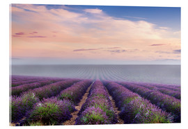 Acrylic glass  Landscape: lavender field in summer at sunrise, Provence, France - Matteo Colombo