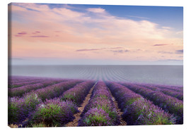 Canvas  Landscape: lavender field in summer at sunrise, Provence, France - Matteo Colombo