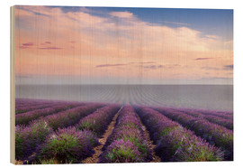 Wood  Landscape: lavender field in summer at sunrise, Provence, France - Matteo Colombo
